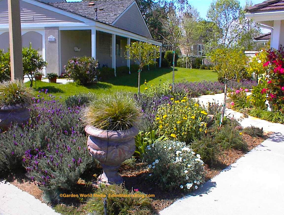 Xeriscape small backyard various design for Front lawn landscaping ideas