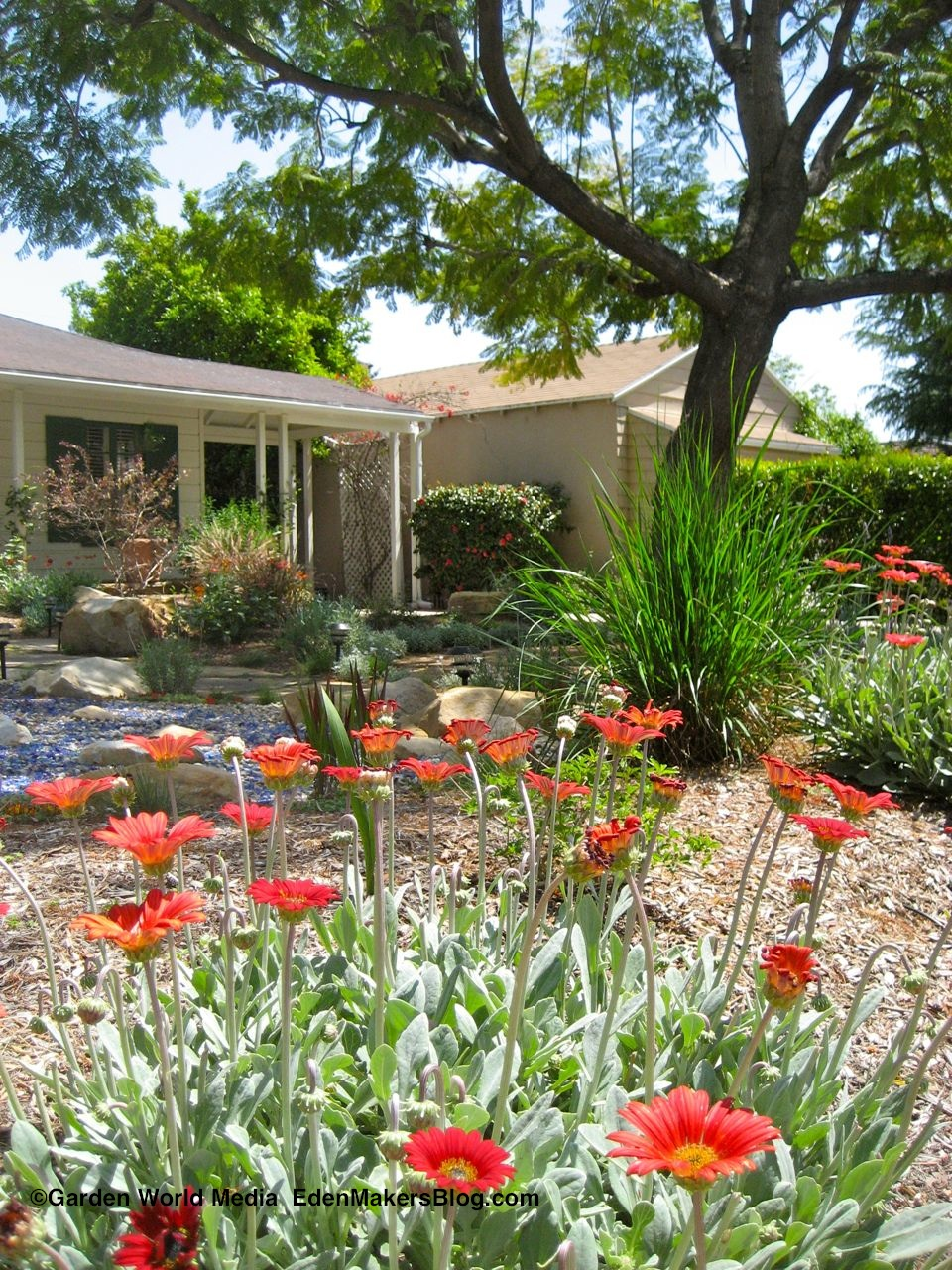 Drought tolerant front yard landscaping ideas car for Front garden ideas