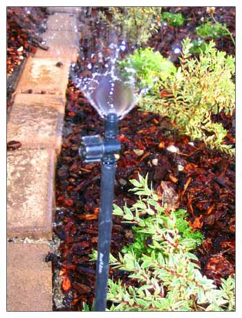 Rainbird Xeri Spray drip system