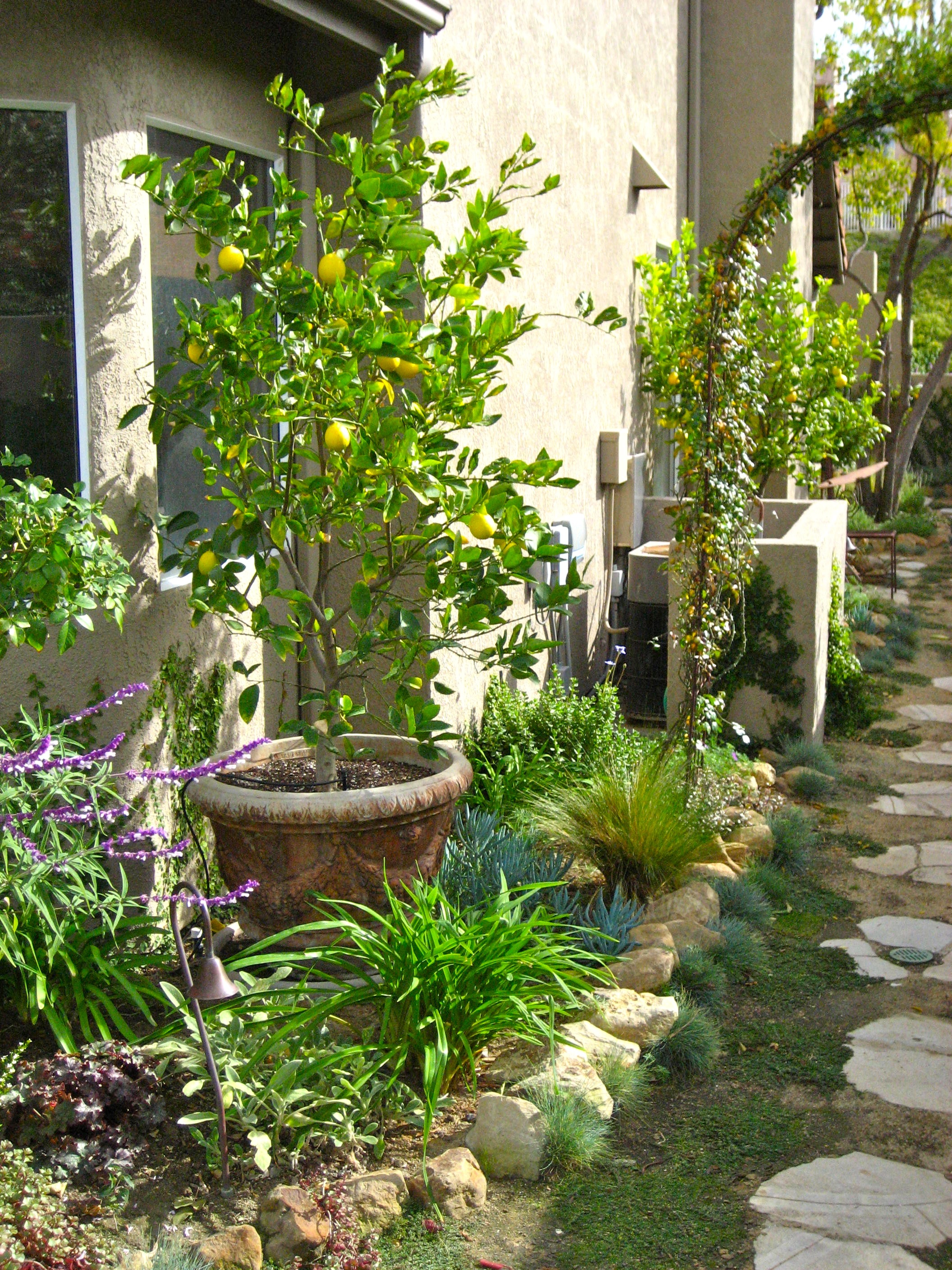 28 Tips For A Small Garden: Dwarf Citrus Trees Planted In Containers Within The Small