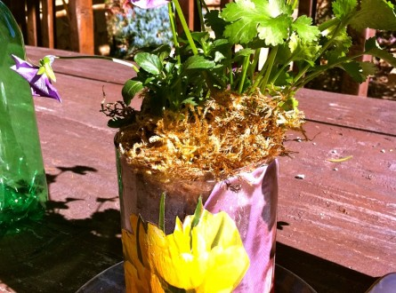 Repurposed Soda Bottle Sub Irrigated Planter By Shirley Bovshow