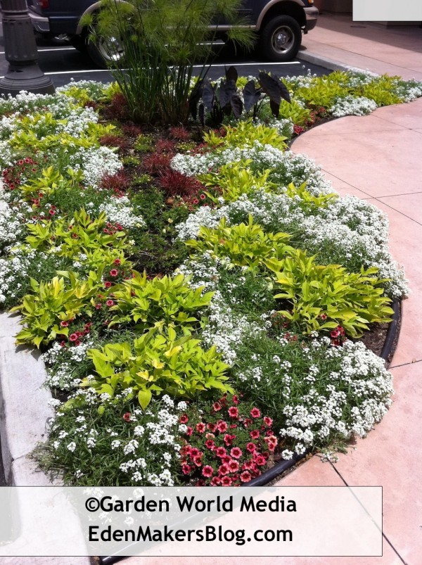 Mixed perennial and annual garden bed