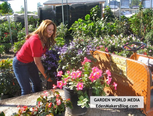 Shirley Bovshow landscape designer buying plants for a project