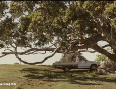 Moreton Bay Fig Tree From The Tree Movie EdenMakers Blog
