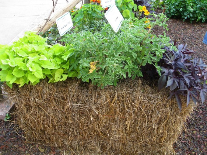 hay and straw bales planted with edible plants