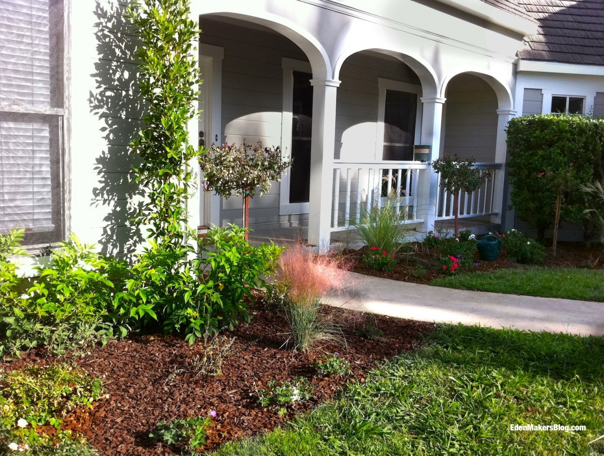 Home-and-Family-Show-Front-Yard-Knock-Out-Rose-Tree-Shirley-Bovshow