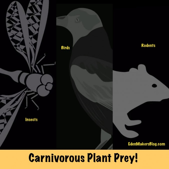 Insects-birds-rodents-carnivorous-plant-prey