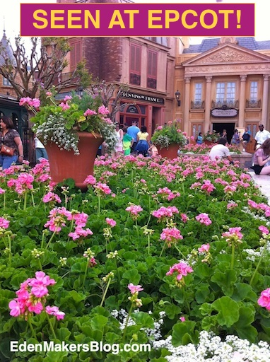 Pink geranium planter bed with terracotta planter filled with cascading annuals