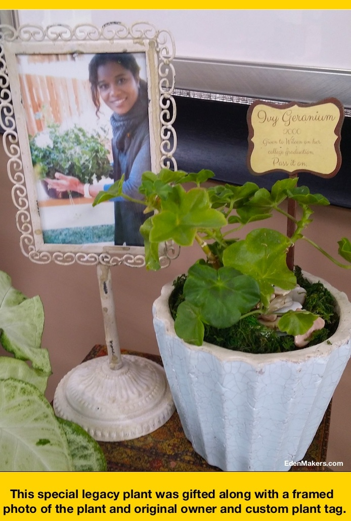 vy-Geranium-cutting-in-pot-with-moss-legacy-plan-shirley-bovshow