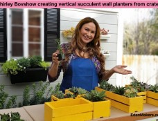 shirley-bovshow-creating-vertical-succulent-wall-planters-wood-crates-home-and-family