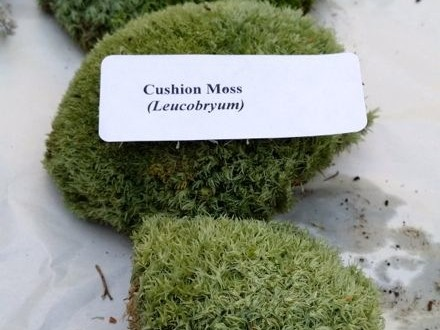 cushion-moss-edenmakers