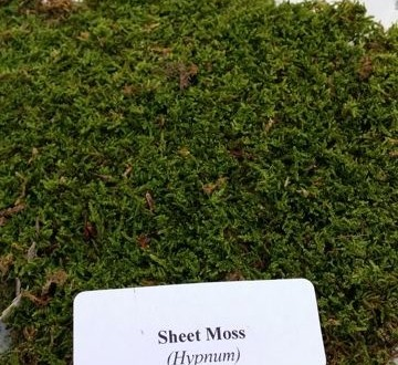 sheet-moss-edenmakers