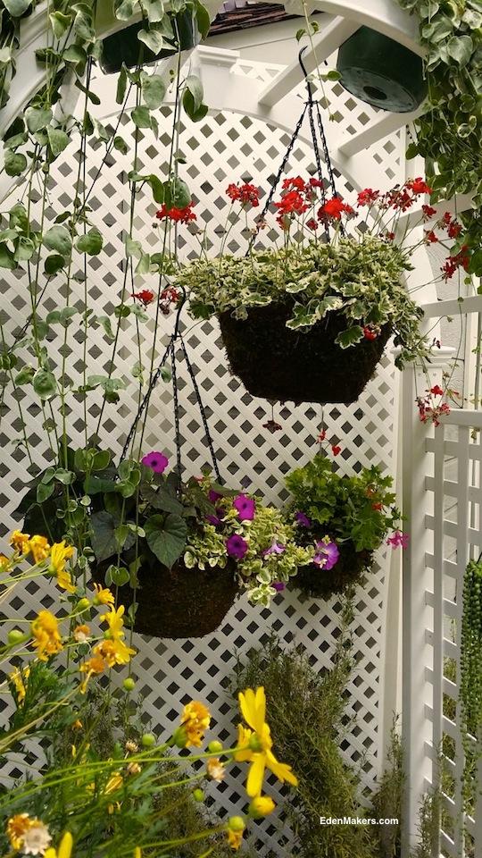 hanging-red-geranium-fushia-petunia-baskets-inside-arbor-shirley-bovshow-designer