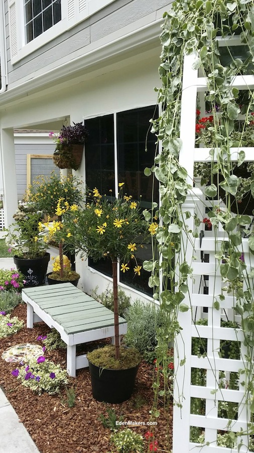 potted-yellow-daisy-topiary-tree-with-garden-bench-and-arbor-in-small-narrow-garden-bed-designed-by-shirley-bovshow-edenmaker-for-home-and-family-show