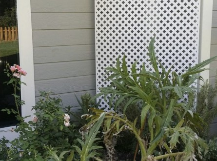 small-narrow-garden-bed-with-neglected-artichoke-plant-tangled-in-roses-lattice-panel-in-background-edenmakers