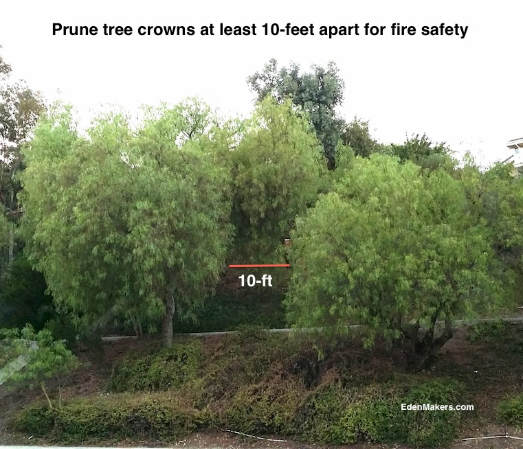 prune-tree-canopies-10-feet-apart-for-fire-safety-edenmakers.com