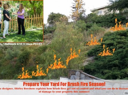 shirley-bovshow-landscape-design-expert-explains-how-to-prepare-for-brushfire-hillsides-home-and-family-edenmakers.com