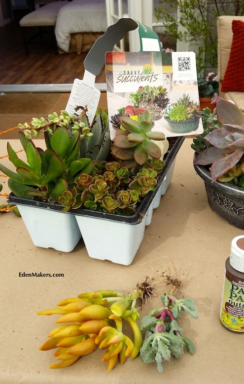 savvy-succulents-assorted-plants-cuttings-edenmakers-blog