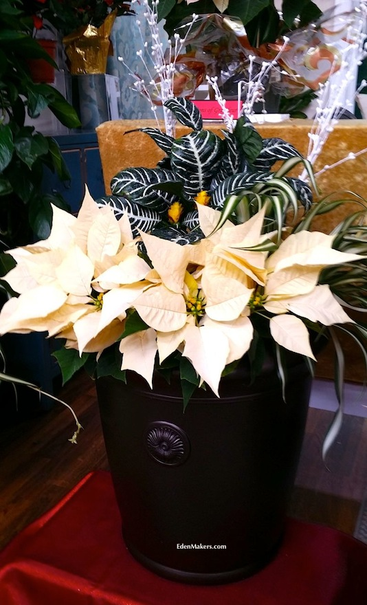 Small-bronze-gardenstone-planter-container-with-poinsettias-edenmakers-blog