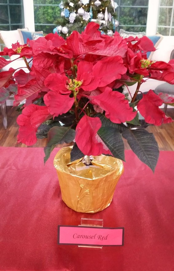 carousel-red-poinsettia-edenmakers-blog