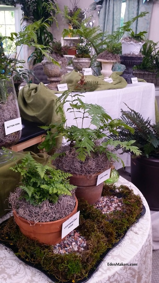 fern-plant-display-shirley-bovshow-home-and-family-show-hallmark-edenmakersblog