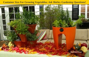 container-sizes-for-growing-vegetables-small-medium-large-explained-edenmakers-blog