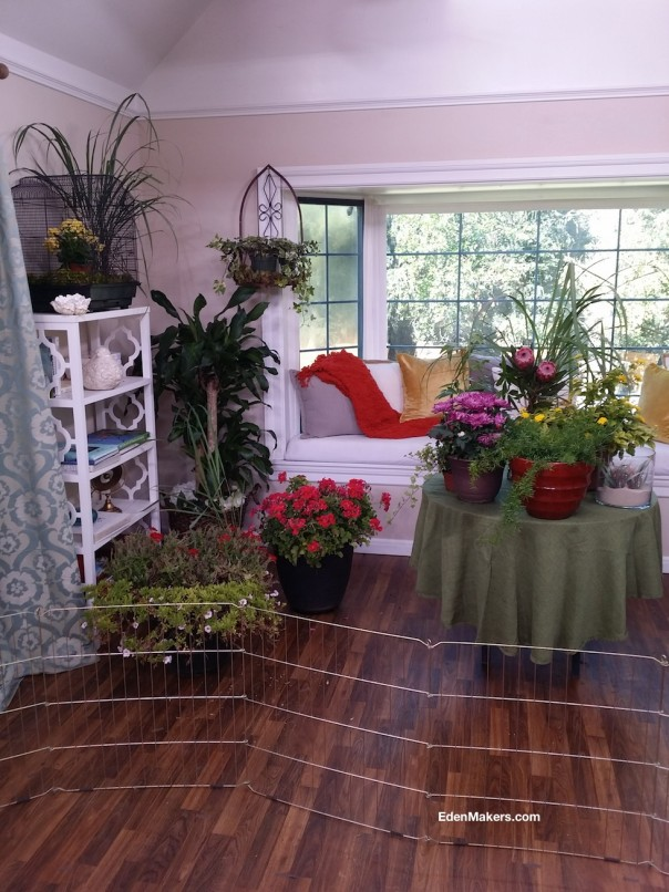 assorted-potted-plants-on-table-over-winter-room-near-window-poisonous-plants-edenmakers-blog