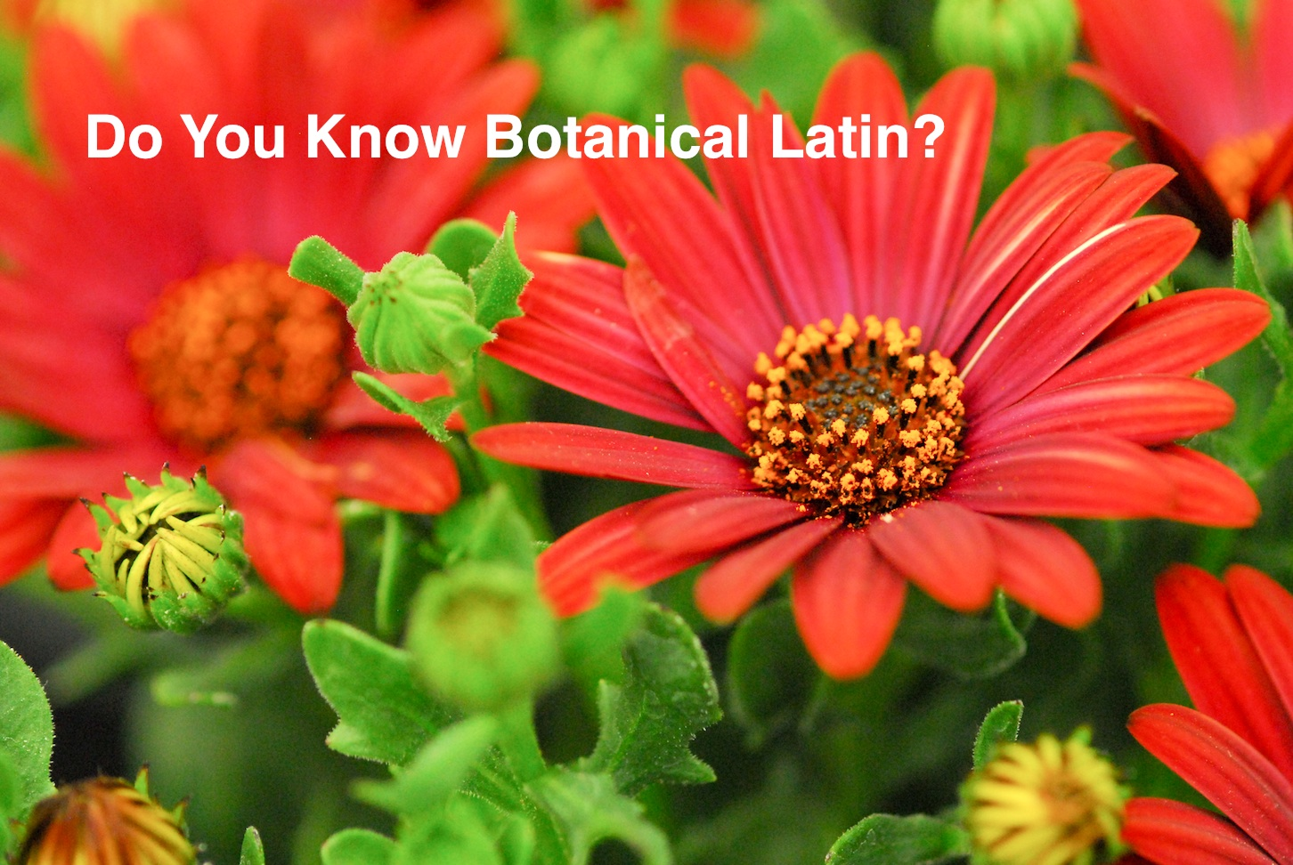 Do you know botanical latin