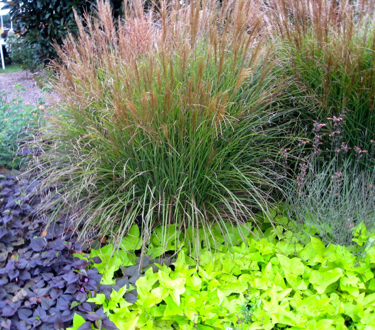 Tips for small gardens joy studio design gallery best for Small ornamental grasses