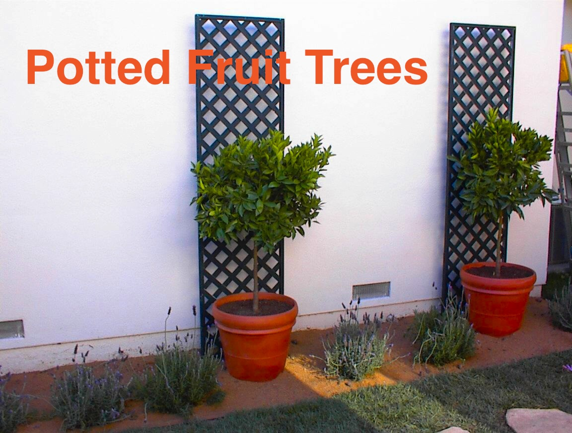 outdoors on Pinterest  Topiaries, Fruit Trees and Dwarf Fruit Trees