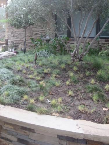 UC Verde Before Mulch