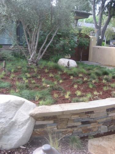 UC Verde after mulching