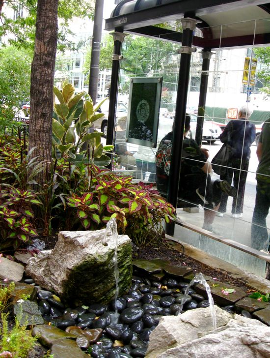 chicago-Bus-Stop-garden-fountain-coleus-ferns