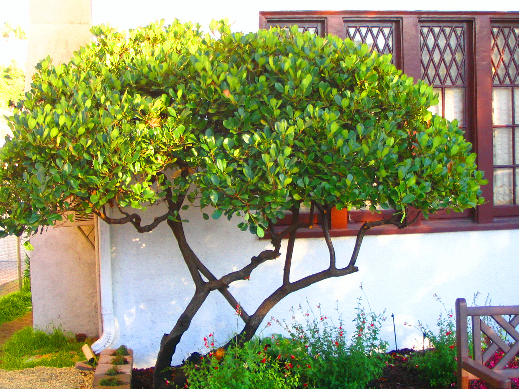 Narrow Backyard Trees : Narrow Small Trees Transformed to Small Tree