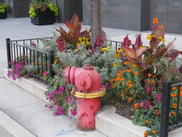red-fire-hydrant-chicago-street-garden.jpg