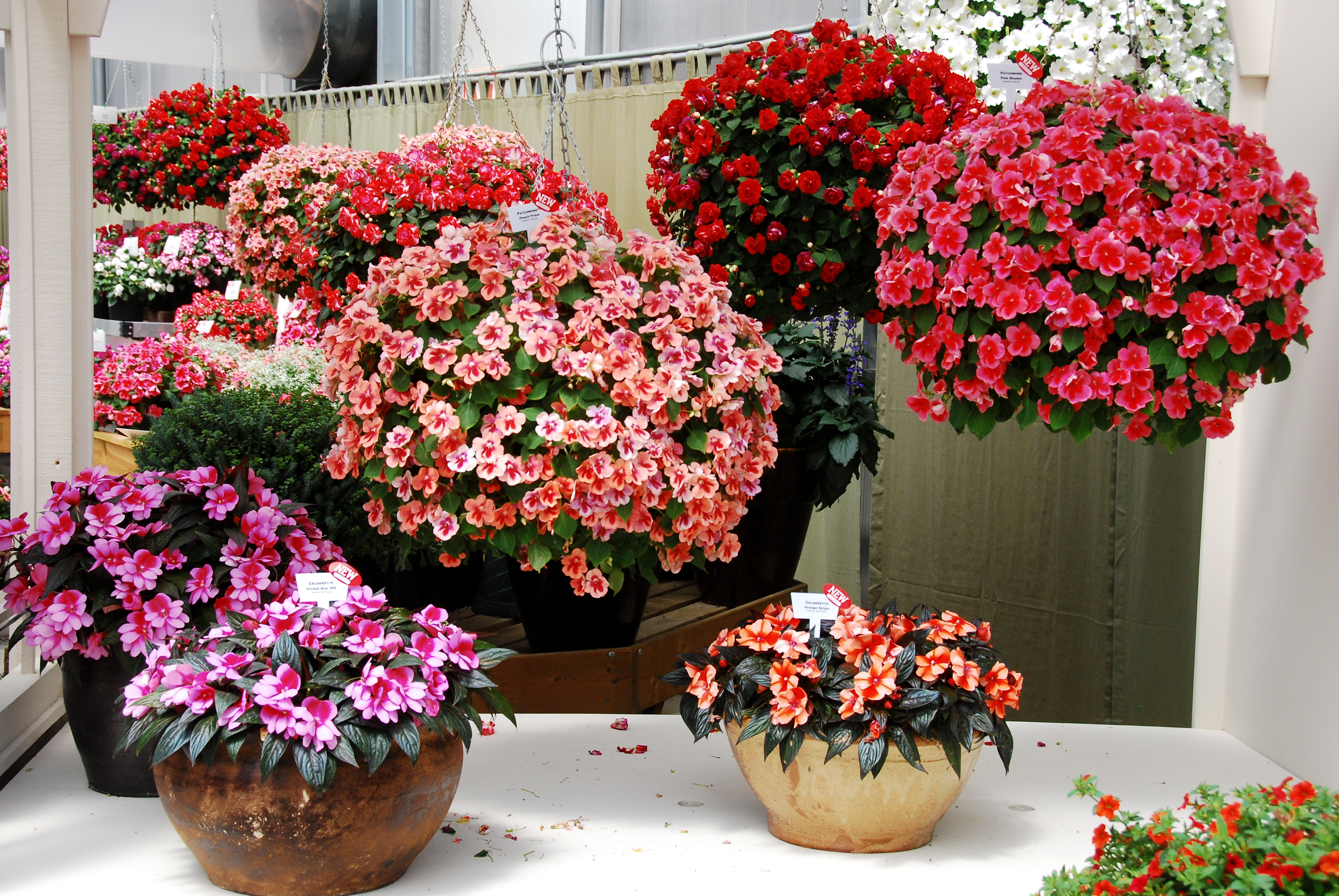 Beautiful Plants in The World Simply Beautiful Plants
