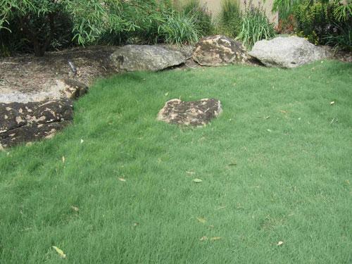 uc-verde-lawn